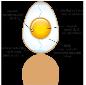 Jak vypadá kvalitní vejce  označené třídou A ?